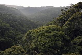 世界遺産、奄美・沖縄を再推薦