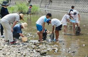 川の生き物を捕まえる子どもたち=有田町戸杓地区