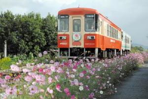 音楽祭当日から約1カ月間運行する甘木鉄道のコスモス号(昨年の様子)