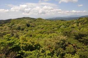 九千部山から石谷山へと続く自然林の樹海