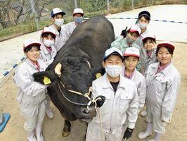 和牛甲子園に出荷した牛「順豊百合」と畜産専攻の3年生=唐津市の唐津南高畜舎(提供写真)