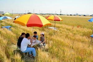 平野の実り実感・収穫期を迎えた麦が一面に広がる佐賀平野。気持ちよい風が渡っていく=佐賀市川副町