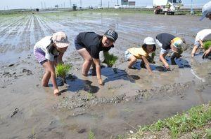 炎天下の中、子どもたちが丁寧に苗を手植えした=佐賀市大和町