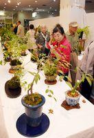 さまざまな花や実をつけた秋の山野草に見入る人たち=武雄市文化会館