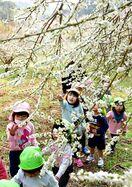 梅の花の香りに誘われ 4日、立春