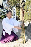 添え木で固定されているビャクシンの若木と説明する川浪宮司=佐賀市の新北神社