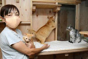 アニマルライブに保護された猫たちと、CFで活動費の支援を求める岩崎ひろみ代表=有田町のアニマルライブ