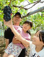 ブドウの房に手を伸ばす来場者=唐津市浜玉町の横田上観光ぶどう園