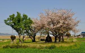 道路際から見える昭和56年に佐賀市の史跡に指定された「御館の森」と石碑=佐賀市鍋島