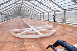 佐賀市清掃工場からCO2の供給を受けるアルビータの藻類培養施設=佐賀市高木瀬町