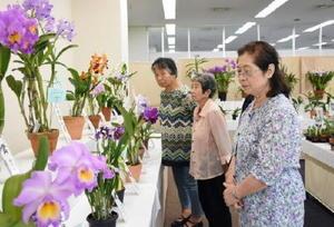 さまざまな品種のランが並ぶ「秋の佐賀洋蘭展」=佐賀市の佐賀玉屋