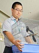 県庁に県鳥(ケンチョウ)カササギ現る 巣から落ち一時保護