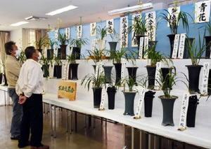 会員が丹精込めて育てた140鉢のランが並ぶ武雄愛蘭会の寒ラン展=武雄市文化会館