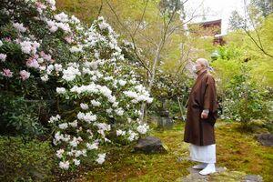 早咲きのシャクナゲが満開になった高野寺。しだれ桜やツバキもみられる=武雄市北方町