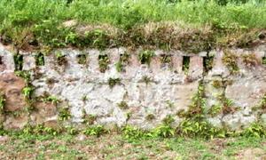 筒江窯跡の焼成室奥壁。高さ1㍍のところに三十数個の通焔孔がみられる