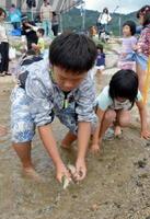 玉島川に設けられた囲いの中で、アユのつかみ取りに夢中の子どもたち=唐津市浜玉町五反田