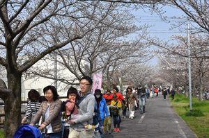 徐福サイクルロードの桜並木を楽しむ来場者ら=佐賀市の南佐賀公園