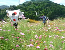 住民有志らが植えたコスモスと手作りのかかし=神埼市脊振町の岩政倉今地区