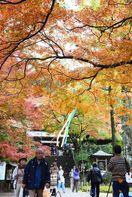 名刹彩るモミジ 大興善寺(基山町)