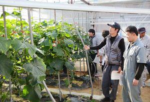 ハウスを視察し、キュウリの生育状況などを確認する胡青会のメンバー=伊万里市内