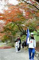 紅葉が映える大川内山を歩く参加者=伊万里市大川内町