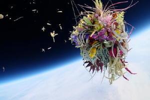 アメリカ・ネバダ州のブラックロック砂漠から、特殊装置を備えたバルーンで成層圏へ植物を飛ばした