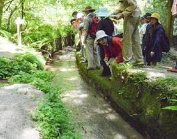 水量を調節するため、一段低くする「野越し」に降り立った参加者=吉野ヶ里町の蛤水道(昨年の様子)