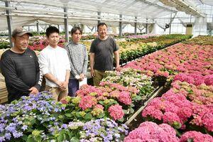 新品種のアジサイ「可愛花」と「雨のち星」を開発した県あじさい研究会の生産者たち。右は富岡和彦会長=佐賀市大和町の栽培ハウス