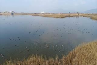 <空さんぽ>巨勢川調整池 縄文の里は野鳥の楽園