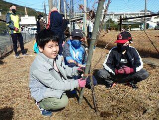 緑の少年団、桜植樹