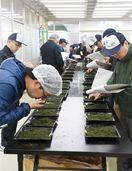 最高値更新1キロ5万1000円 「うれしの茶」初入札会