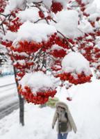 真冬日となった札幌市内では、ナナカマドの実に雪が積もっていた=20日午後