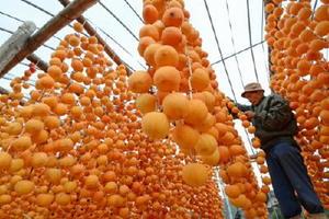 早朝からずらりと並んだ干し柿の手入れをする上野耕太郎さん=佐賀市大和町松梅