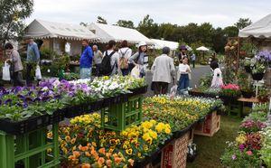 これからの季節に見頃の花苗が並ぶ=神埼市郡の吉野ヶ里歴史公園臨時駐車場