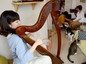 ネコやカフェ利用者にハープの音色を聴かせる中村理恵さん=佐賀市中央本町の猫カフェ「コロン」