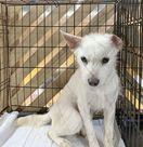 「多頭飼育崩壊」犬50匹救って 有田のNPOが里親急募