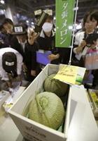 初競りで2玉150万円の最高値が付いた夕張メロン=26日朝、札幌市中央卸売市場