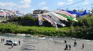 和歌山県九度山町で始まった「こいのぼりの丹生川渡し」=5日