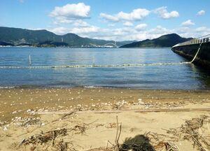 カブトガニの繁殖地、多々良海岸=伊万里市木須町