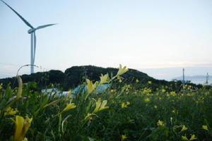 使用済み核燃料の中間貯蔵施設建設を巡り、一部住民が協力する意向を示した唐津市鎮西町串地区。夏場には25万本のユウスゲの花が広がる=7月15日