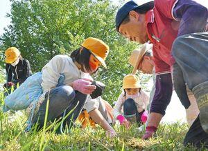 保全会の会員の手ほどきを受けながらエヒメアヤメの株を植える子どもたち=佐賀市久保泉町の帯隈山