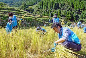 地元農家や企業、佐賀大学と協力して開いた稲刈り体験活動の様子=唐津市相知町の蕨野の棚田