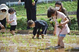 田植えを体験する園児たち=玄海町の浜野浦の棚田