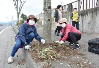 伊万里市東山代町 最後の「花いっぱい運動」に汗 パンジーの苗1300本植栽