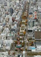 札幌市の大通公園。中央下はさっぽろテレビ塔=2019年11月