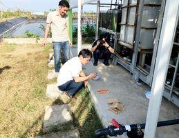 中山鉄工所が技術を提供したベトナム・ベンチェのエビ養殖場の様子(提供写真)