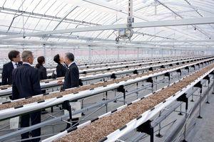 イチゴの新規就農者を育成するトレーニングファームのハウス内を見学する関係者。栽培ハウスすべて高設栽培システムを導入している=白石町新開