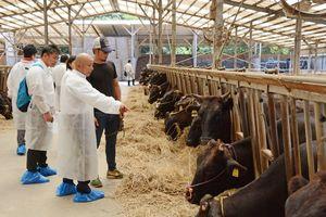 分娩間隔の短縮に向けて工夫しているモデル農家の牛舎を視察する参加者=唐津市肥前町