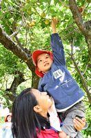 留学生に抱っこしてもらいながら、梅を収穫する園児=佐賀市大和町の梅園