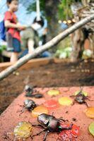 国内外のカブトムシやクワガタが間近で見られる「カブトムシハウス」=吉野ケ里歴史公園